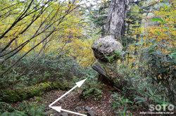 愛山渓沼の平(木のコブ)