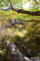 高原温泉沼(登山道)