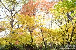 高原温泉沼(紅葉の森林)