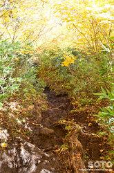 高原温泉沼(紅葉のトンネル)