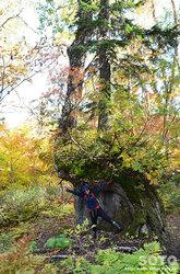 高原温泉沼(巨木と)
