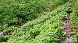 平山登山(23)