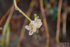 秋の黒岳登山(花殻)