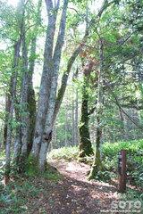 白湯山自然観察路(2)