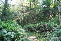 白湯山自然観察路(3)