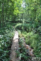 白湯山自然観察路(4)