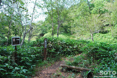 白湯山自然観察路(5)