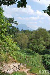 白湯山自然観察路(6)