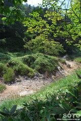 白湯山自然観察路(7)
