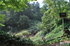 白湯山自然観察路(8)