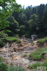 白湯山自然観察路(9)
