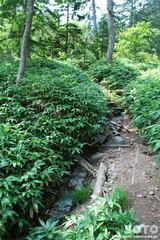 白湯山自然観察路(10)