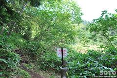 白湯山自然観察路(11)