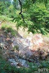 白湯山自然観察路(12)