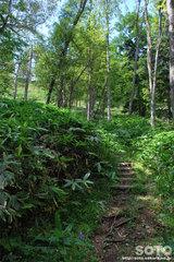 白湯山自然観察路(17)