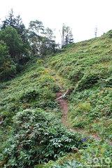 白湯山自然観察路(18)