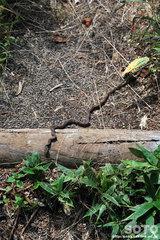白湯山自然観察路(蛇)