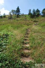 白湯山自然観察路(19)