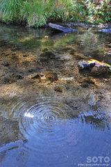 高原温泉沼(15)