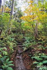 沼の平(登山道1)