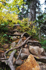 沼の平(登山道6)