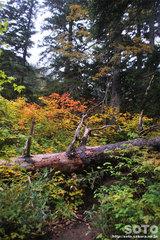 沼の平(登山道8)
