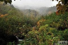 沼の平(登山道9)