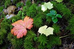 沼の平(苔と落ち葉)