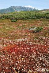 旭岳姿見の池コース(13)