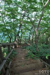 和琴半島自然探勝路(11)