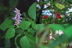 和琴半島自然探勝路(花)