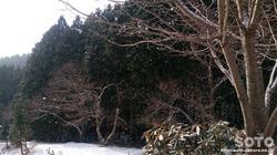 山小屋2017/01/23(1)