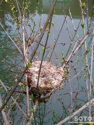 山小屋の春2018(鳥の巣)