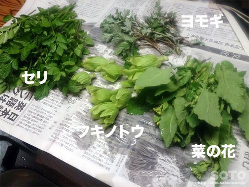 山小屋(山菜たち)