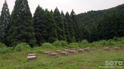 201606山小屋(養蜂)