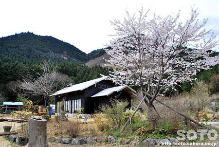 山小屋(山桜)