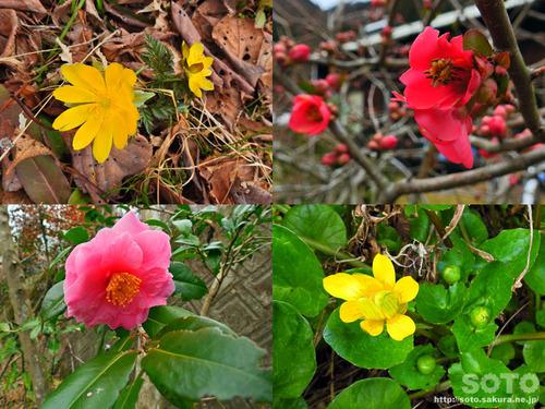 山小屋 春の花