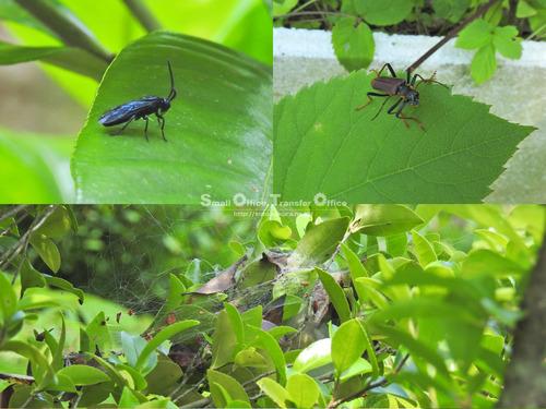 山小屋2020初夏(虫たち)