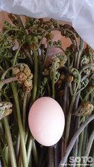 烏骨鶏の卵と蕨