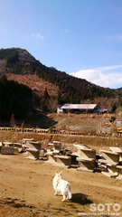 山小屋(1)
