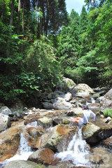 渓流遊び(1)